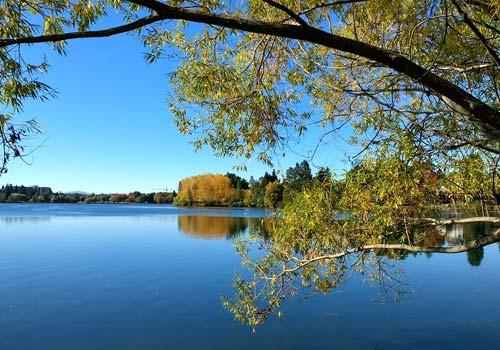 Green Lake Park Trees & Water in Seattle, Washington